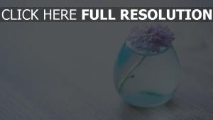 chrysantheme blume licht vase wasser