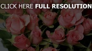 rose knospen blass rosa blumenstrauß tropfen