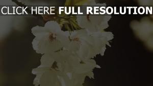 frühling blumen zweig blüte
