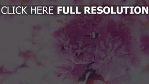 rosa blumen strauß