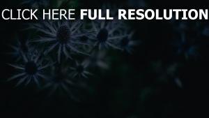 stachelig pflanze dunkel