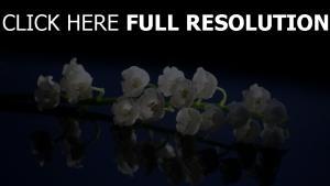oberfläche nahaufnahme maiglöckchen frühling reflexion