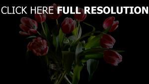 tulpen blumen rot zweifarbige vase