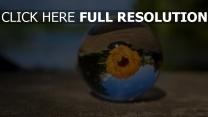 verwischen blume kugel glas