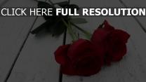 stiel paar rose blumen knospe