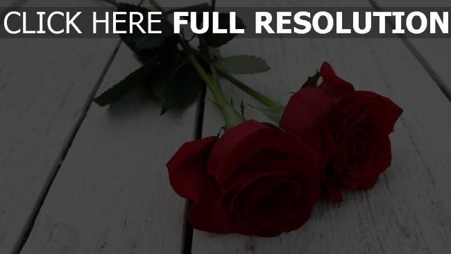 hd hintergrundbilder stiel paar rose blumen knospe