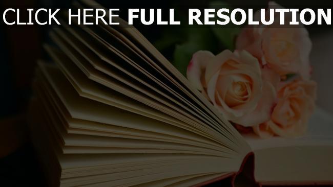 hd hintergrundbilder lesen rosen buch strauß