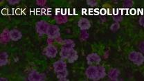 blumenbeet blumen pflanzen