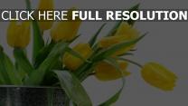 tulpen gelbe blätter wasser tropfen