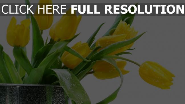 hd hintergrundbilder tulpen gelbe blätter wasser tropfen
