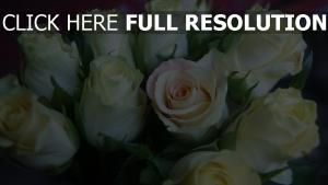 rosen knospen blütenblätter zart strauß