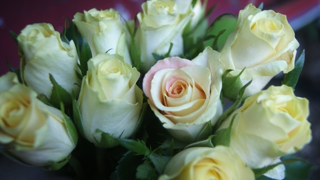 hd hintergrundbilder rosen knospen blütenblätter zart strauß