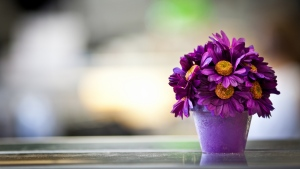 lila blütenblätter topf blume