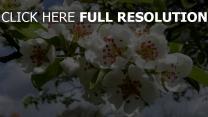 zweig frühling blüte blumen