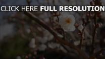 frühling baum blüte blumen