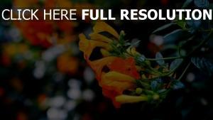 nahaufnahme ast knospen blüten