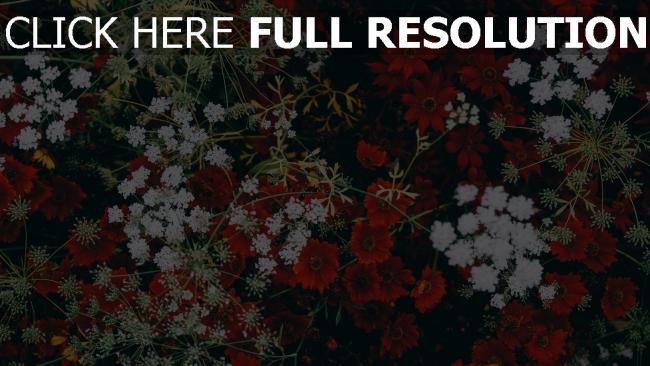 hd hintergrundbilder dekoration gras blumen