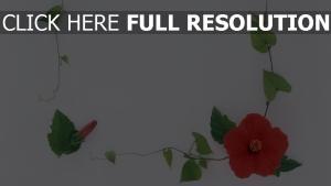 winde oberfläche blätter hibiskus