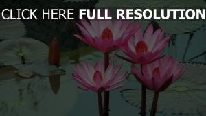 wasser wasser lilie lotus