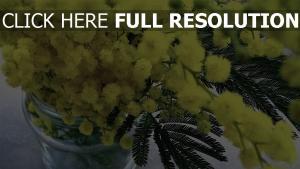 strauß vase blumen mimosen
