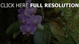 blätter stengel tropfen orchidee gras