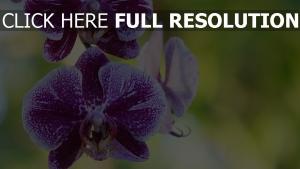 knospe blüte orchidee