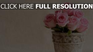 topf blüten blumen rosen