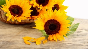 blütenblätter oberfläche korb sonnenblumen