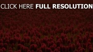 plantage frühling blumen tulpen