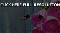 fliegen bestäubung blumen biene