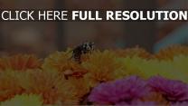 bestäubung blumen biene