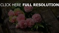 blume rosa blumen nelken