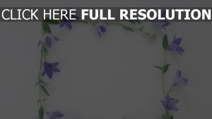 quadrat oberfläche blumen ellflowers