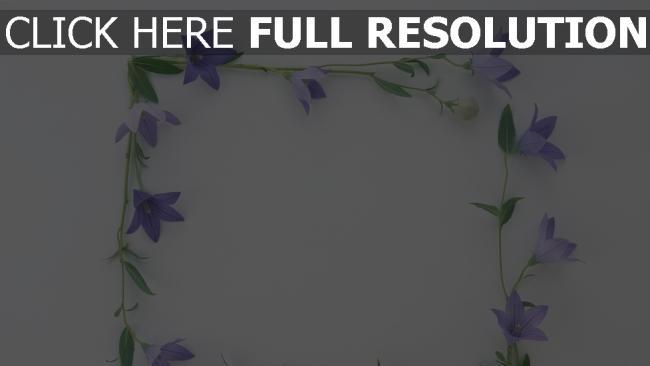 hd hintergrundbilder quadrat oberfläche blumen ellflowers