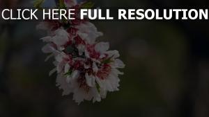 blütenblätter zweig blume