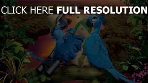 rio 2 papageien aras vögel karte fluss wald