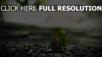 android roboter grün felsen rucksack