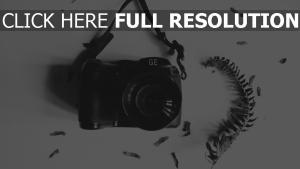 kamera blatt herbarium bw zweig