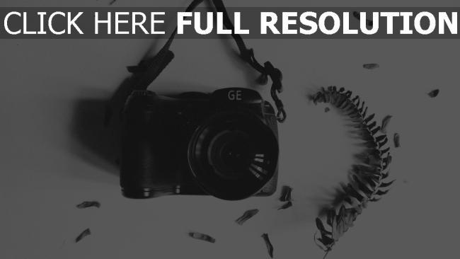 hd hintergrundbilder kamera blatt herbarium bw zweig