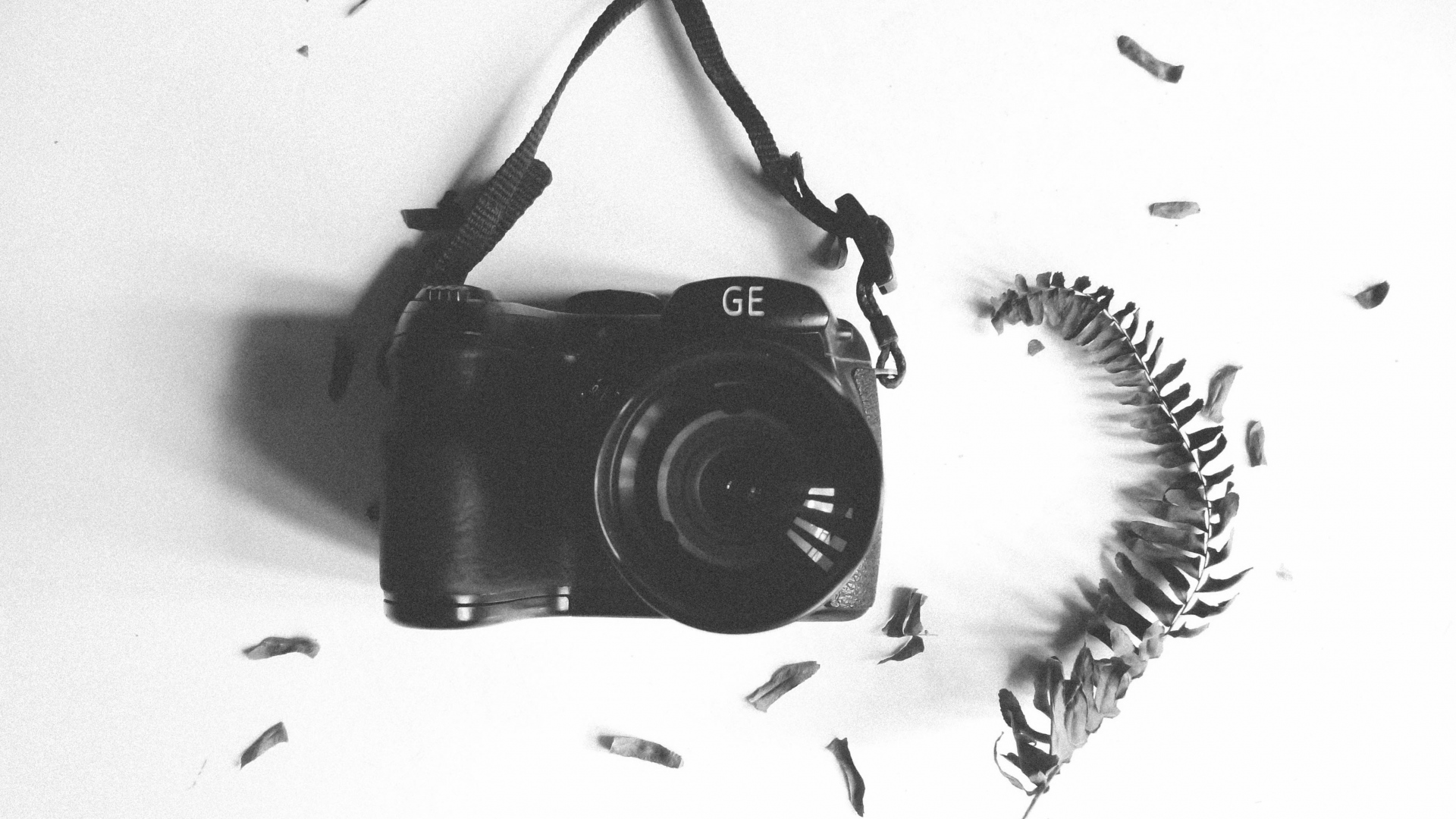 hd hintergrundbilder kamera blatt herbarium bw zweig 1920x1080