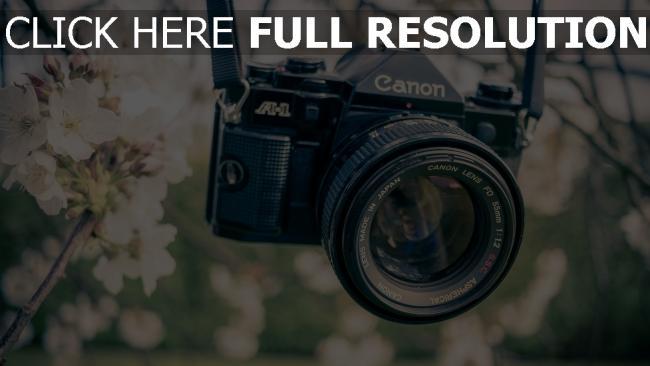 hd hintergrundbilder blumen kamera garten objektiv canon farbe