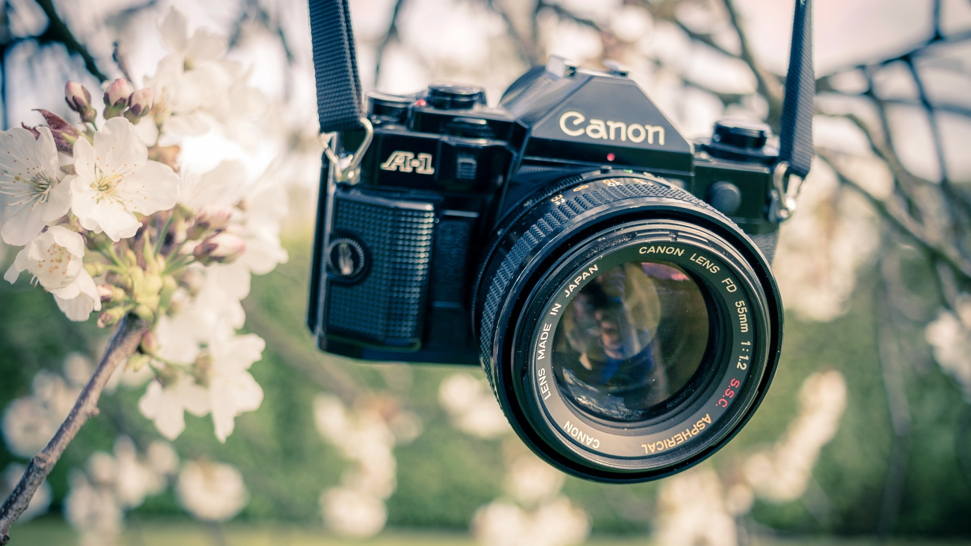 hd hintergrundbilder blumen kamera garten objektiv canon farbe 1920x1080