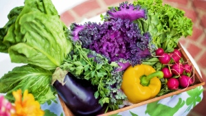 gemüse ernte paprika auberginen salat radieschen