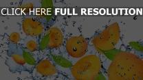 aprikosen wasser spritzen blätter