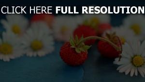 gänseblümchen beeren erdbeeren