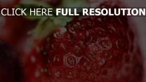 annäherung reif oben beere erdbeere