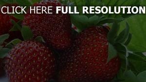 süße reife beere erdbeere