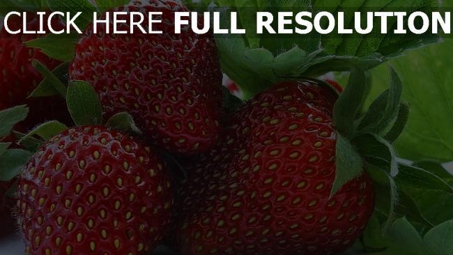hd hintergrundbilder süße reife beere erdbeere