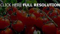 gemüse zweig tomate