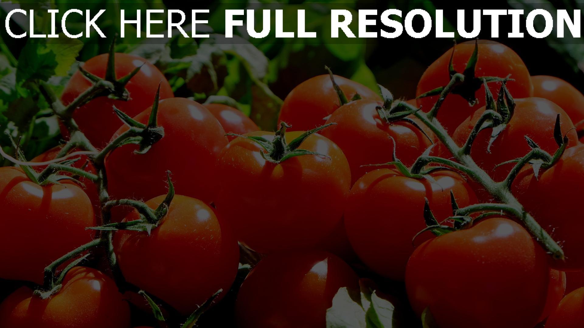 hd hintergrundbilder gemüse zweig tomate 1920x1080
